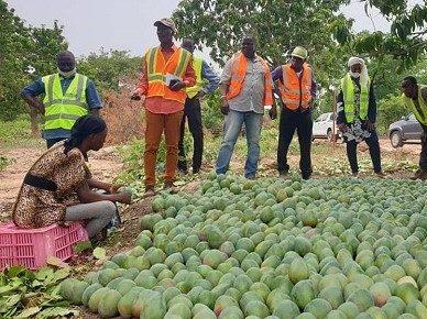 La promotion à la filière la mangue